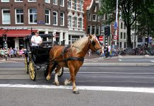 """Bye bye: paard, wagen én zware vrachtwagen """"Amsterdam scherpt het beleid voor het toelaten van zwaar vrachtverkeer in de binnenstad aan. Dit omdat bruggen en kades zuchten en steunen onder de zware last. Bruggen en kades werden ontworpen in de tijd van paard en wagen."""