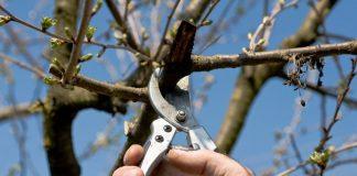 Kleinfruit snoeien met Wil bij Fruittuin van West