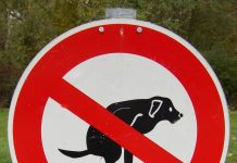 Regels voor honden bezitters in Amsterdam