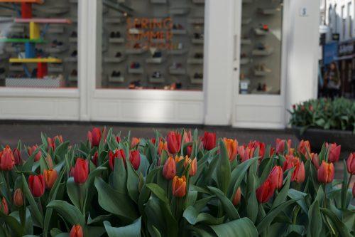 Als de lente komt pluk ik voor jou tulpen uit Amsterdam