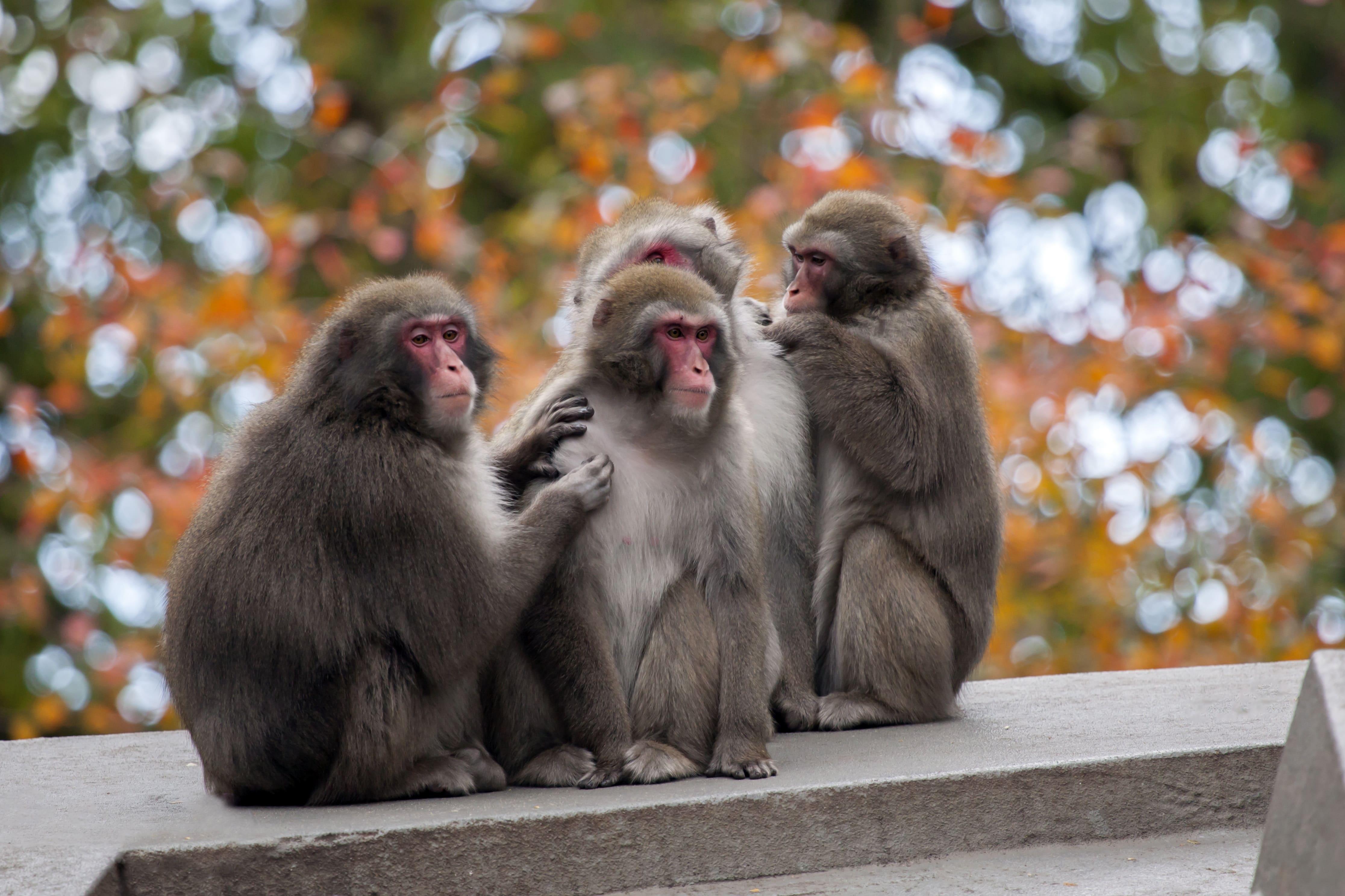 Een rondje Artis tijdens event homoseksualiteit in het dierenrijk