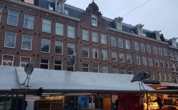 Waar kan ik naar de markt in Amsterdam?
