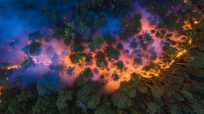 Foto-expo over bosbranden op NDSM