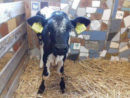 Het verhaal achter Kinderboerderij 't Brinkie